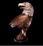 American Beauty Eagle Bust